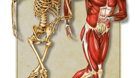 kosti-i-misici