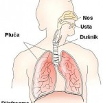 organi-za-disanje